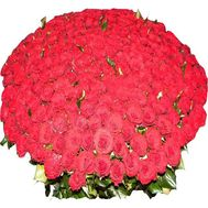 Bouquet of 501 roses - flowers and bouquets on 7roz.kiev.ua