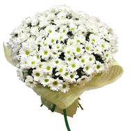 Bouquet of 35 chamomile chrysanthemums - flowers and bouquets on 7roz.kiev.ua