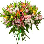 Bouquet of 35 alstromeries - flowers and bouquets on 7roz.kiev.ua