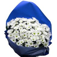 Bouquet of 11 chamomile chrysanthemums - flowers and bouquets on 7roz.kiev.ua