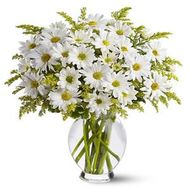 Bouquet of flowers from 11 chamomile chrysanthemums - flowers and bouquets on 7roz.kiev.ua