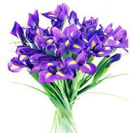 Букет из 21 ириса - цветы и букеты на 7roz.kiev.ua