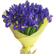 Букет из 35 ирисов - цветы и букеты на 7roz.kiev.ua