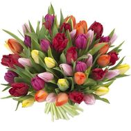 Bouquet of 51 tulips - flowers and bouquets on 7roz.kiev.ua