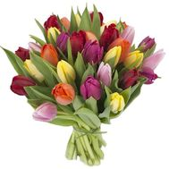 Bouquet of 33 Tulips - flowers and bouquets on 7roz.kiev.ua