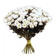 Bouquet of 17 chamomiles - flowers and bouquets on 7roz.kiev.ua