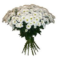 Bouquet of 21 chamomile chrysanthemums - flowers and bouquets on 7roz.kiev.ua