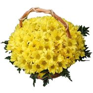 Basket of 19 chrysanthemums - flowers and bouquets on 7roz.kiev.ua