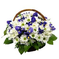 Basket of 12 chrysanthemums and 7 irises - flowers and bouquets on 7roz.kiev.ua