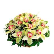 Basket of 19 orchids - flowers and bouquets on 7roz.kiev.ua