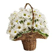 Basket of 7 chamomile chrysanthemums - flowers and bouquets on 7roz.kiev.ua