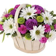 Basket of 8 chrysanthemums and 9 carnations - flowers and bouquets on 7roz.kiev.ua