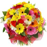 Bouquet of flowers from 45 multi-colored gerberas - flowers and bouquets on 7roz.kiev.ua