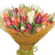 Bouquet of 85 tulips - flowers and bouquets on 7roz.kiev.ua