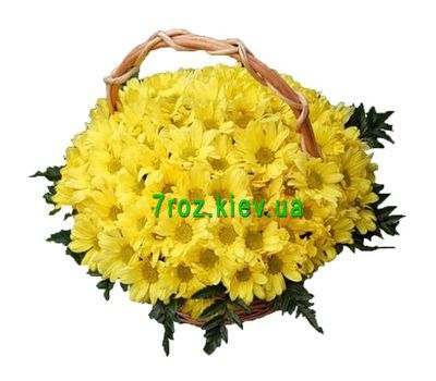 """""""Корзина из 19 хризантем"""" в интернет-магазине цветов 7roz.kiev.ua"""