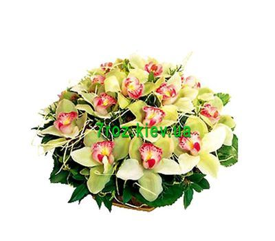 """Basket of 19 orchids"" in the online flower shop 7roz.kiev.ua"