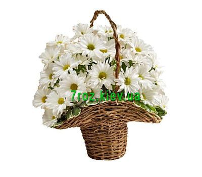 """Basket of 7 chamomile chrysanthemums"" in the online flower shop 7roz.kiev.ua"
