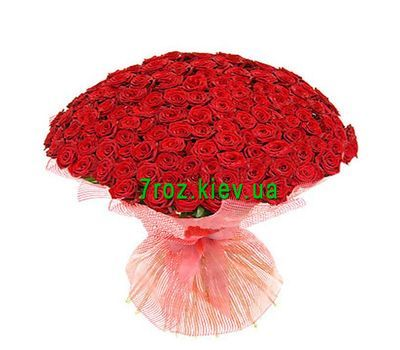 """Bouquet of 151 red roses"" in the online flower shop 7roz.kiev.ua"